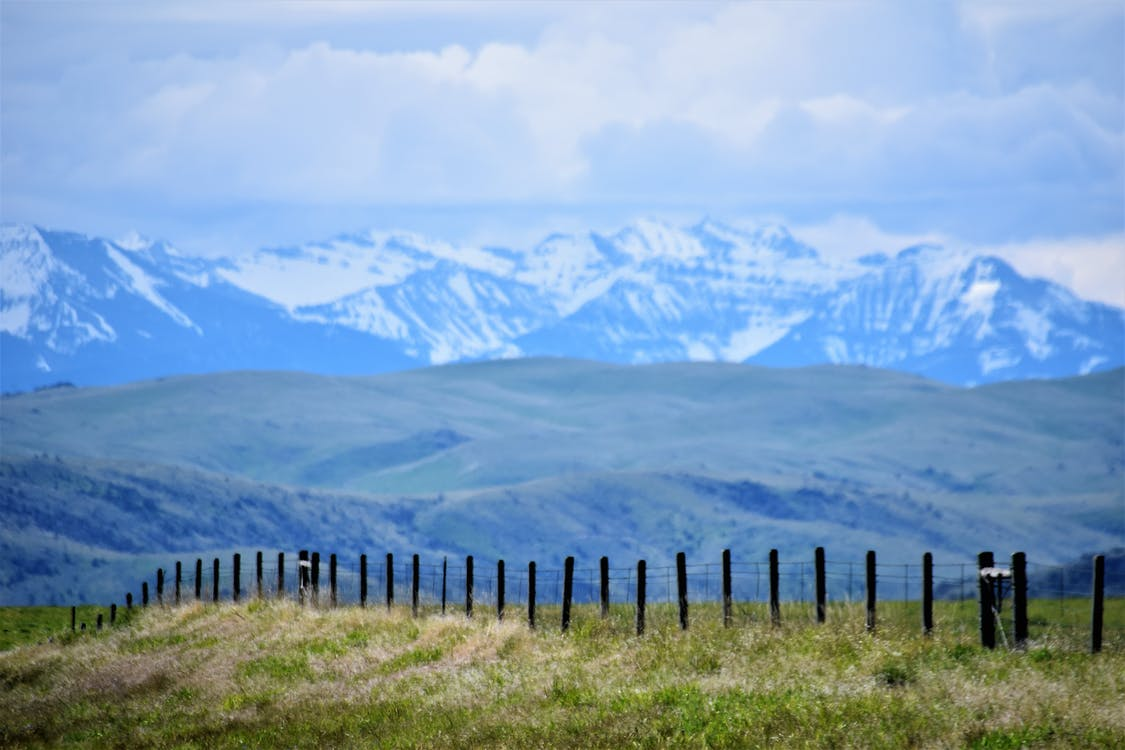 Black Wooden Fences and Green Grasses