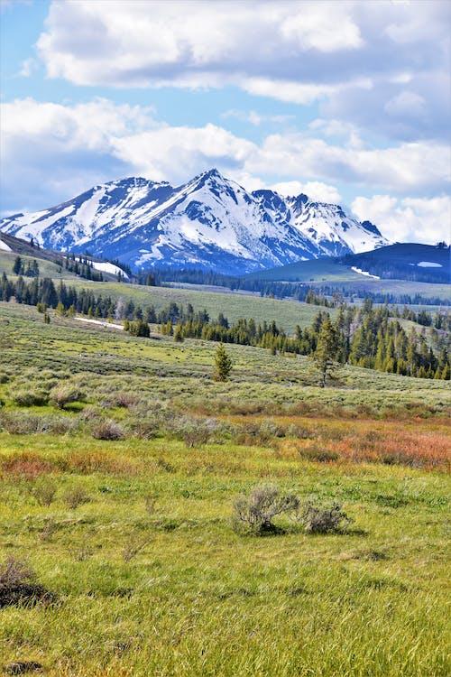 Immagine gratuita di montagna, parco nazionale di yellowstone, sagebrush