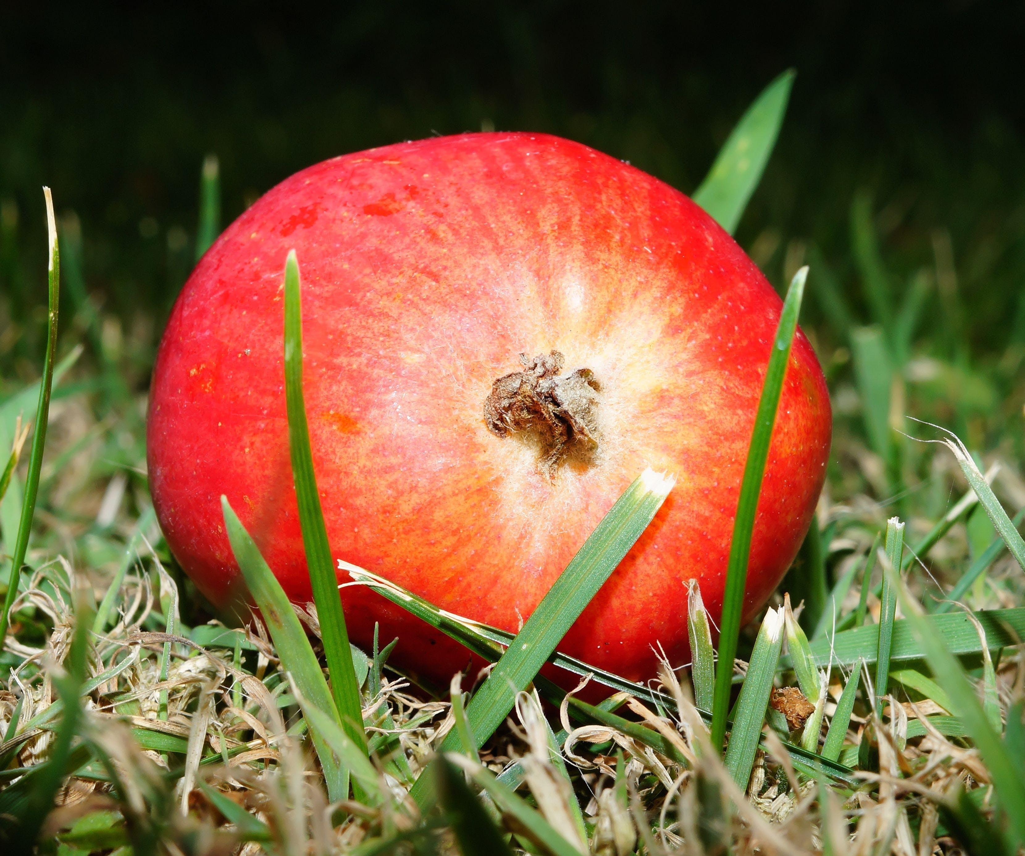 Kostenloses Stock Foto zu fokus, frucht, granatapfel, gras