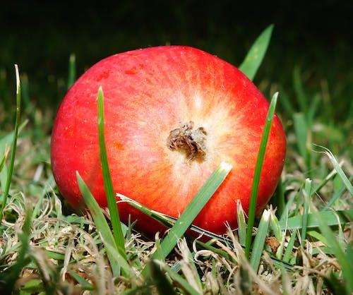 Fotobanka sbezplatnými fotkami na tému detailný záber, granátové jablko, makro, rozmazanie