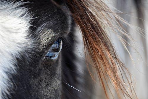Základová fotografie zdarma na téma detail, kůň, modré oči, oko