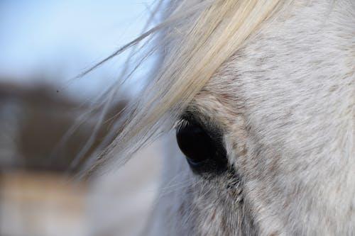 Immagine gratuita di animale, cavallo, occhio, primo piano
