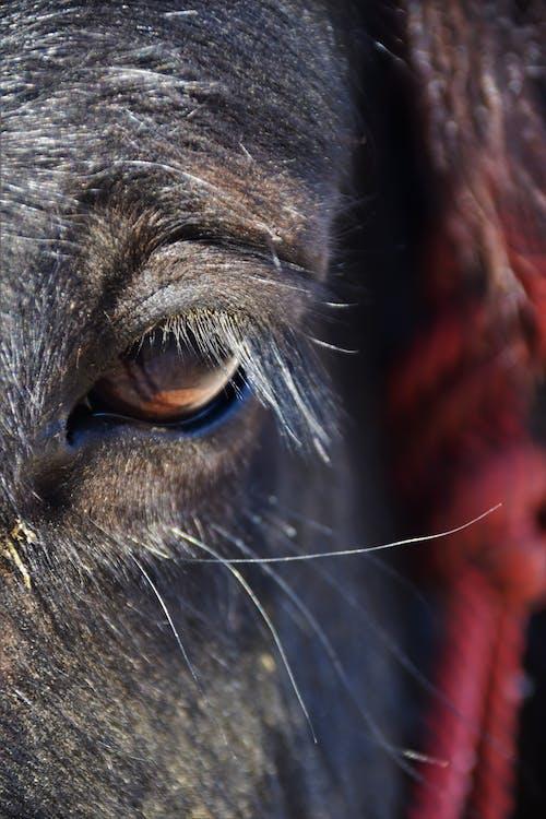 Základová fotografie zdarma na téma kůň, oko