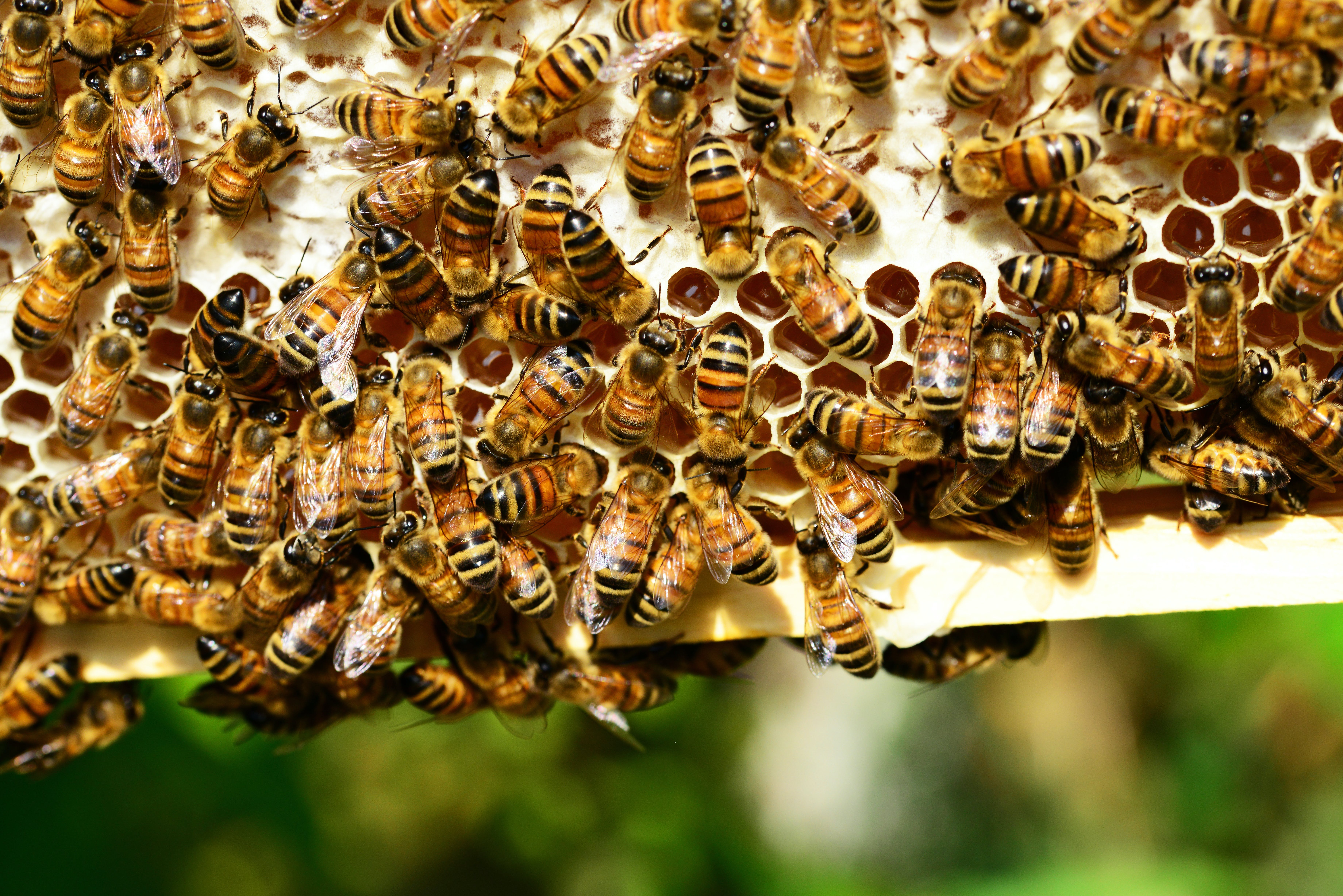 beehive, bees, close-up