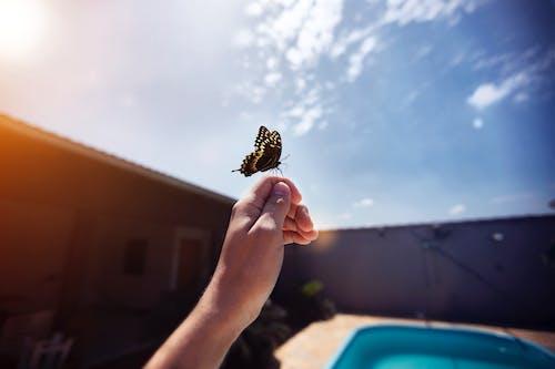 Papillon Noir Et Jaune Sur La Main De Personnes