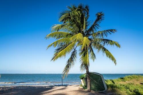 Photos gratuites de amoureux de la nature, baie, beauté de la nature, bord de mer