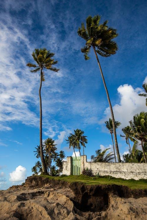 Photos gratuites de amoureux de la nature, arbre, beauté de la nature, bord de mer