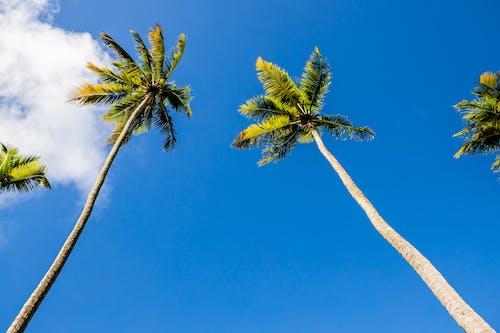 Photos gratuites de amoureux de la nature, arbre, beauté de la nature, complexe