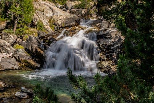 Immagine gratuita di acqua, albero, autunno, cadere