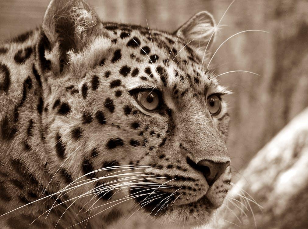 dyr, dyrefotografering, katt