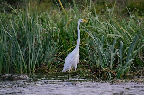 White Bird on Water Near Green Grass