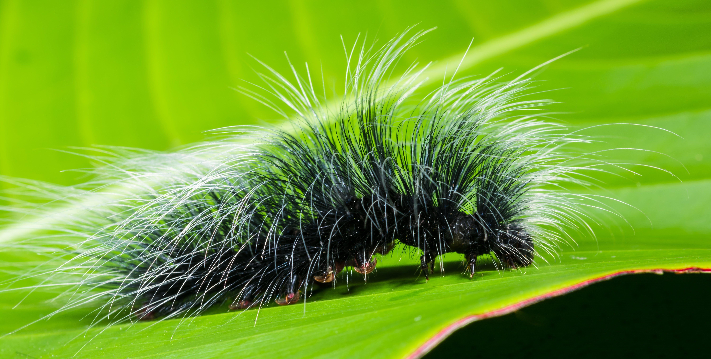 Gratis lagerfoto af behåret, close-up, insekt, larve