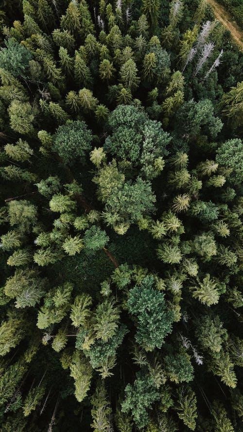 Ảnh lưu trữ miễn phí về cây, cỏ, dji, dji mavic