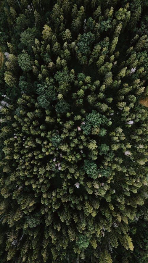 Foto d'estoc gratuïta de a l'aire lliure, abundància, agricultura