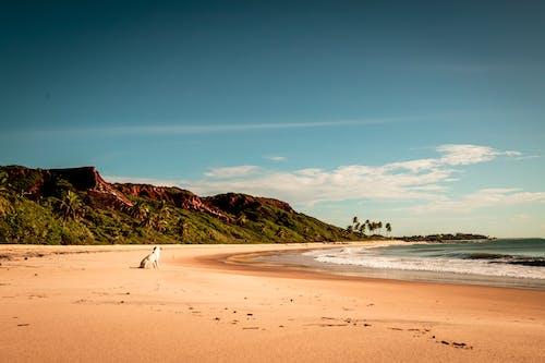 Photos gratuites de amoureux de la plage, baie, bord de mer, chien