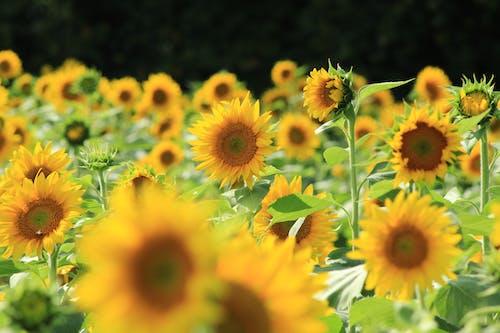 꽃, 꽃잎, 들판의 무료 스톡 사진