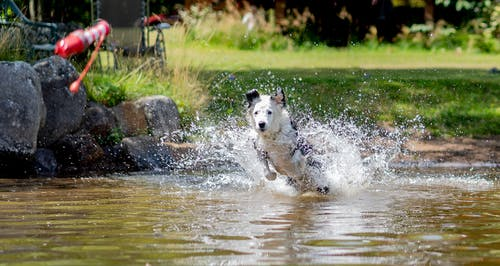 Free stock photo of dog, lake, pet