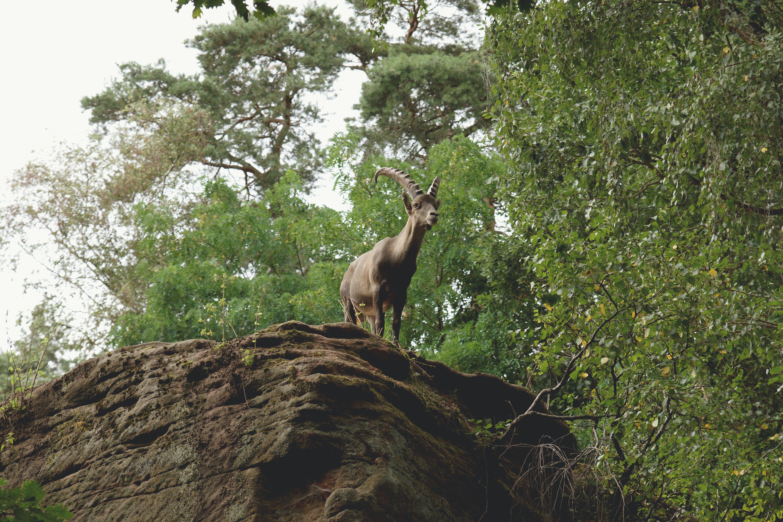 Gratis arkivbilde med bukk, busk, dagslys, dyr