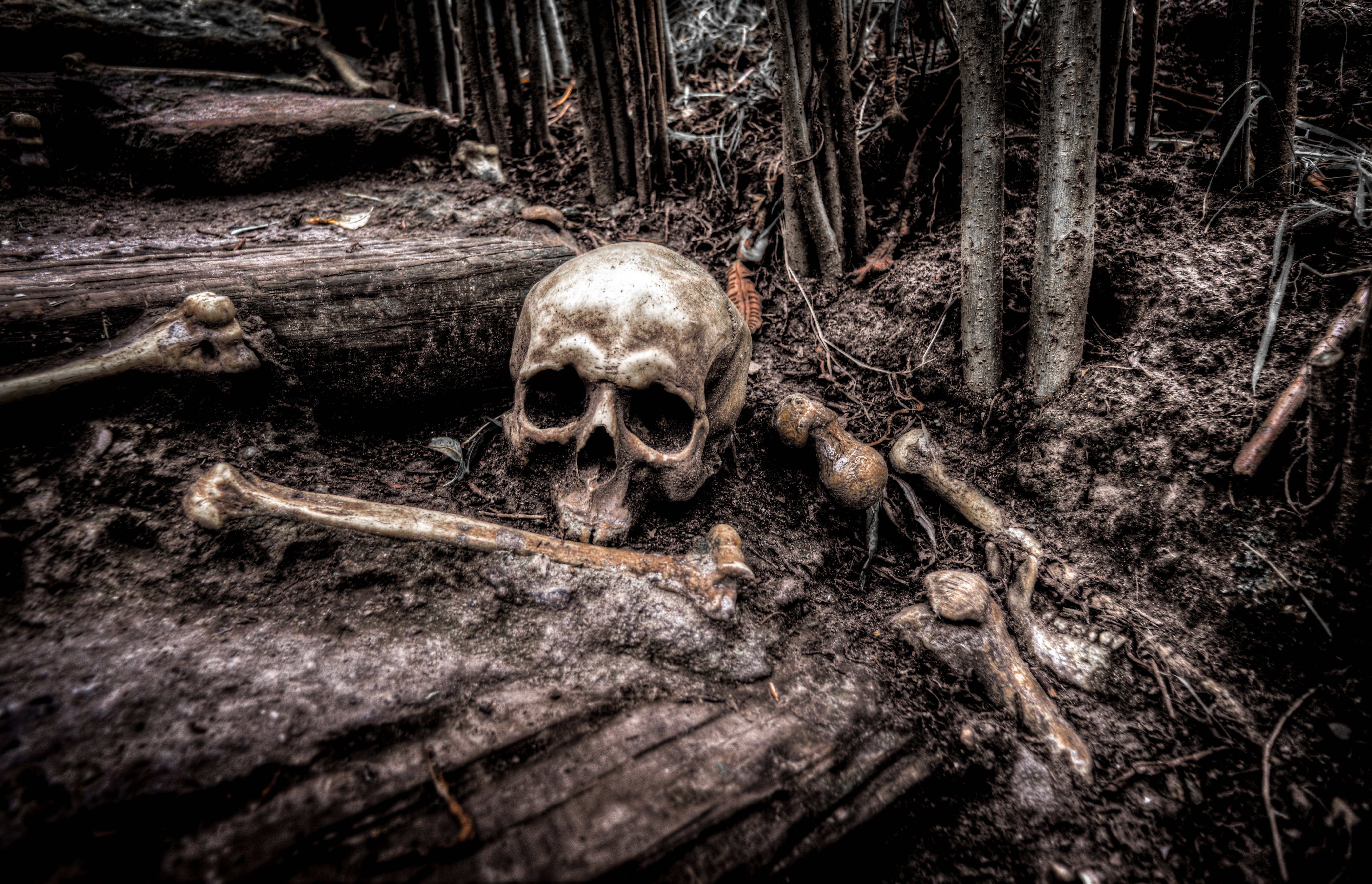 Foto stok gratis akar, gelap, halloween, horor