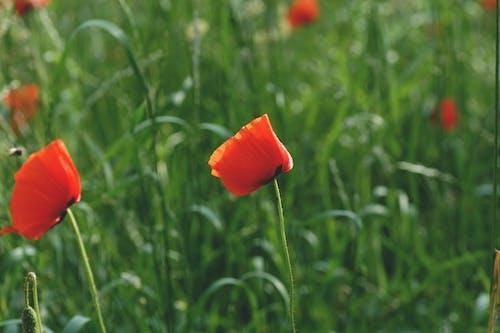alan, alan derinliği, bitki örtüsü, bulanıklık içeren Ücretsiz stok fotoğraf