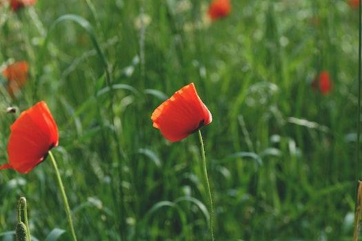 Kostenloses Stock Foto zu feld, blumen, gras, blütenblätter