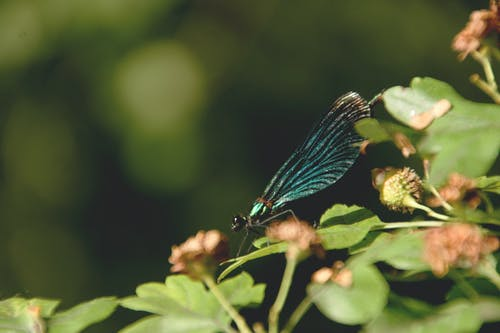 Blue Insect on Green Leaf