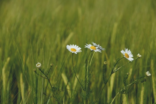 Free stock photo of nature, field, flowers, grass