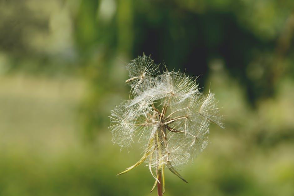 New free stock photo of blur, flower, dandelion