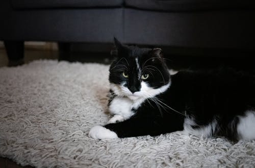 Tuxedo Cat Lying on White Textile
