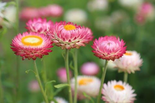Gratis stockfoto met bloeien, bloemen, bloesem, fabrieken