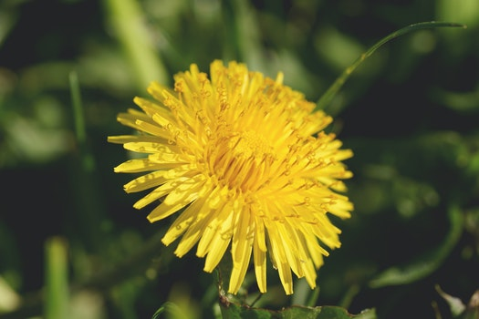 Free stock photo of nature, garden, yellow, petals
