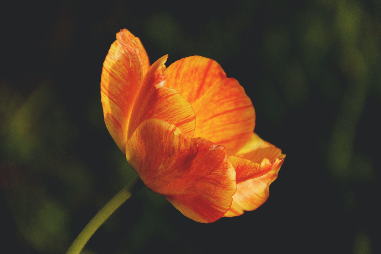 flóra, jasný, krásný