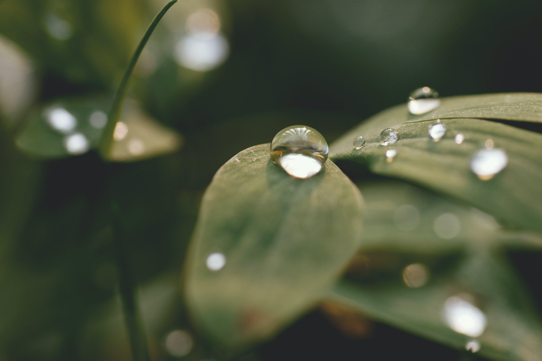 blur, close-up, dewdrop