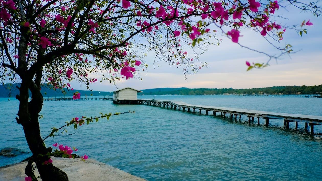 Free stock photo of beach, cambodia, flower
