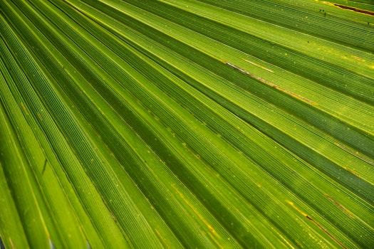 Kostenloses Stock Foto zu muster, textur, pflanze, blatt