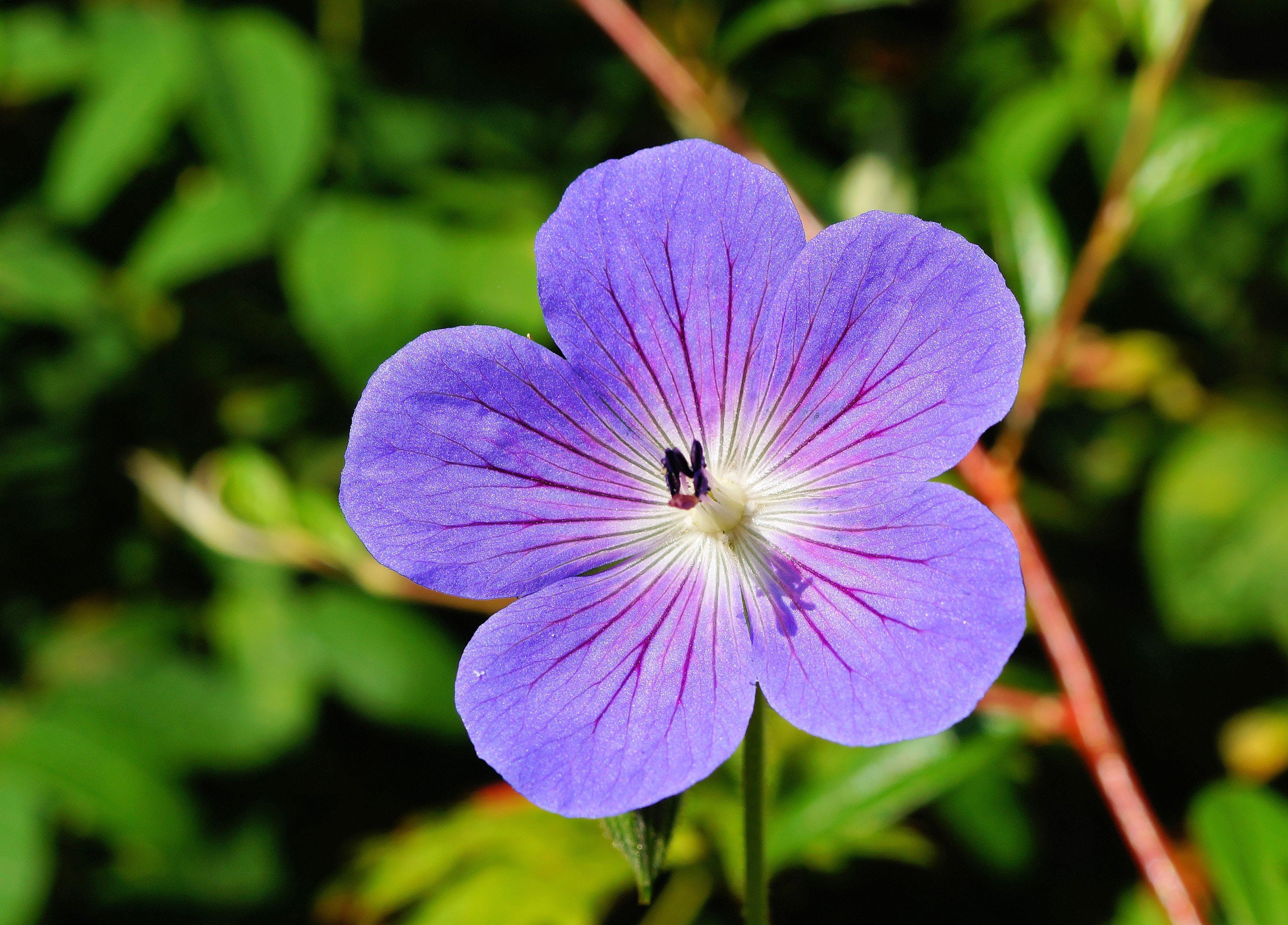 Purple Flower Shallow Focus Photography