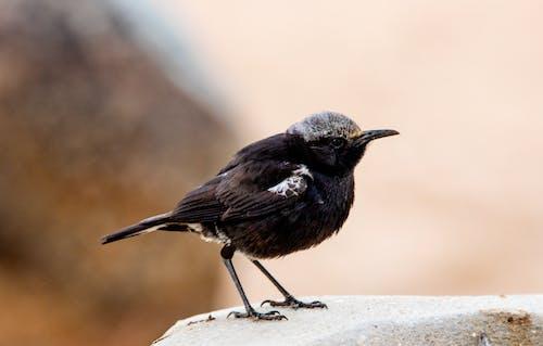 Black Bird on White Concrete Surface
