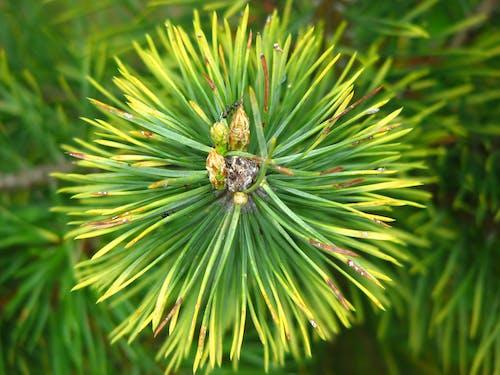 Foto d'estoc gratuïta de macro, natura, planta, primer pla