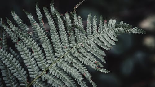 Green leaves of fern branch growing in forest on daylight on blurred background