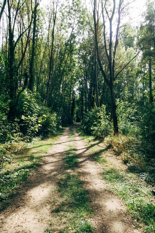 Photo of an Unpaved Pathway in The Woods