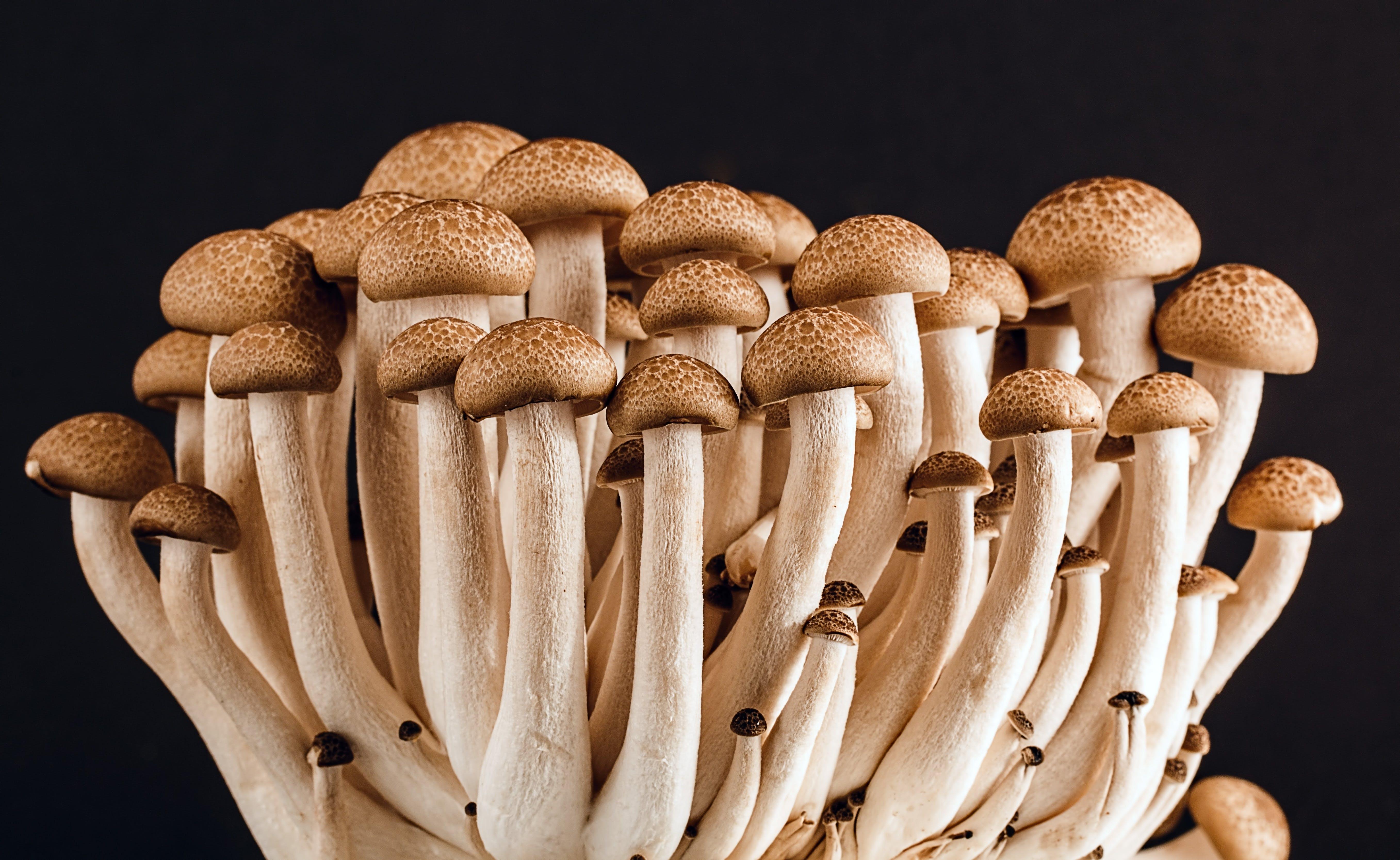 čerstvý, houby, hřib