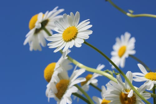 꽃, 매크로, 식물군, 아름다운의 무료 스톡 사진