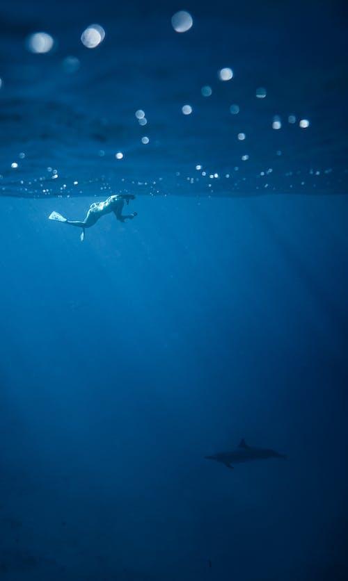 Pessoa Irreconhecível Nadando Submarino Perto De Golfinhos