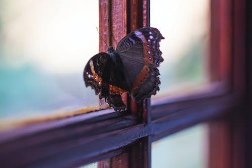 Free stock photo of beauty, bokeh, butterfly