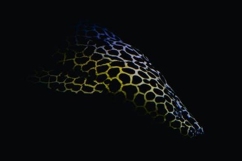 Free stock photo of aquarium, blue, dark