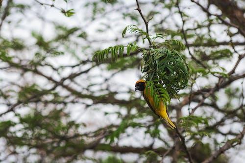 Free stock photo of bird, bokeh, focus
