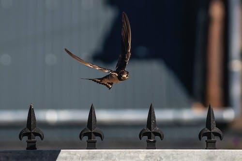 Free stock photo of bird, bokeh, fence