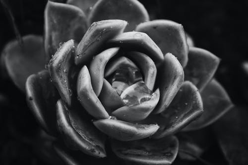 Free stock photo of contrast, dark, flower