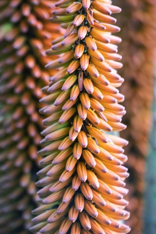 Free stock photo of bokeh, botanical, colourful