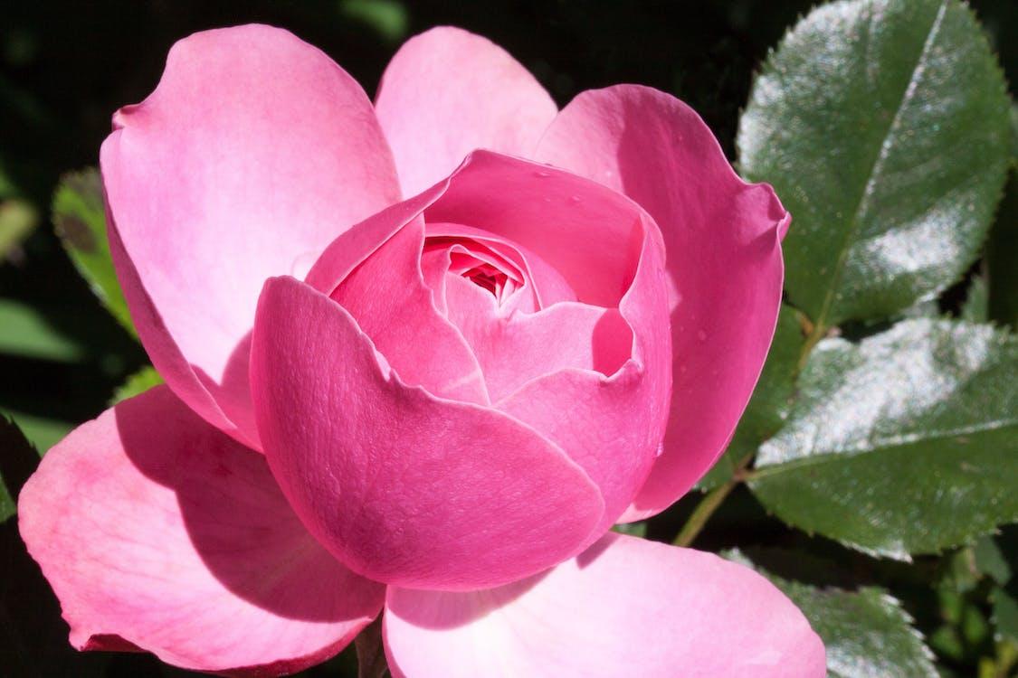 broto, close, flor